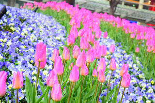 花の写真・画像素材[2048511]