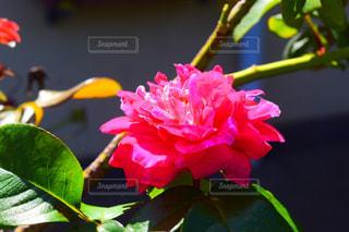 花の写真・画像素材[2049226]