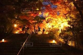 夜空に広がる紅葉の写真・画像素材[2747615]