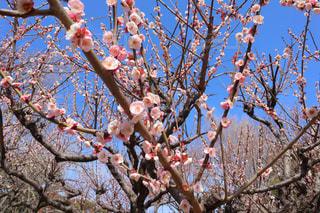 小春日和の写真・画像素材[3017296]