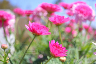 かわいい花たちの写真・画像素材[3047956]