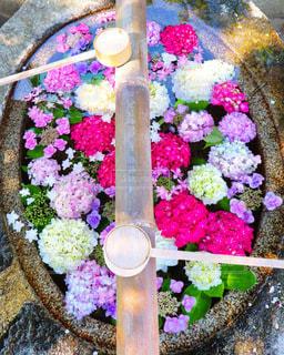 綺麗な神社の花手水の写真・画像素材[3375043]