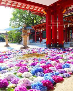紫陽花の花手水の写真・画像素材[3375048]