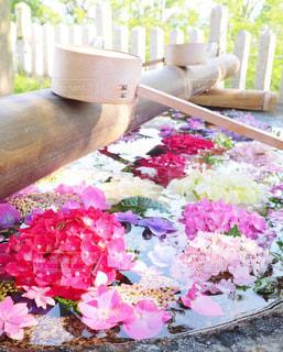 紫陽花の花手水の写真・画像素材[3375050]