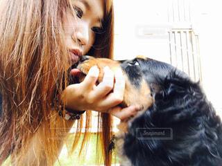 犬,動物,愛,ダックスフント,愛犬