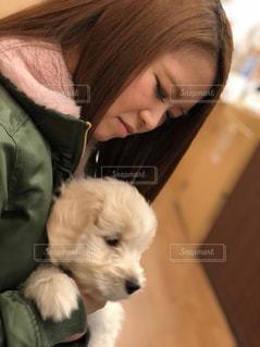 犬,動物,愛,愛犬,見つめる,ゴールデンドゥードゥル