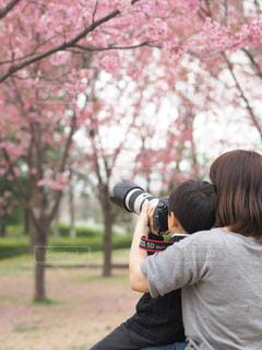 さくら桜の写真・画像素材[2130664]