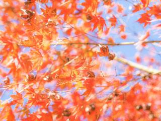 木のクローズアップの写真・画像素材[2211506]