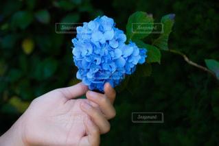 花を持つ手の写真・画像素材[3374443]