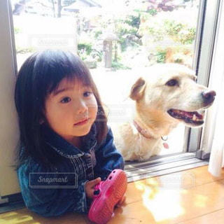 犬,女の子,仲良し,ラブラドール,オヤツまち