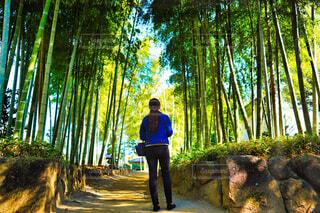 竹林の中の女性の写真・画像素材[4594624]