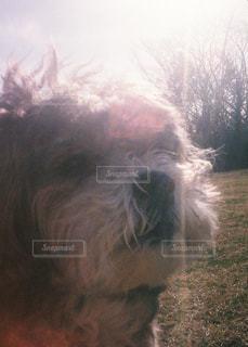 動物のクローズアップの写真・画像素材[2107718]