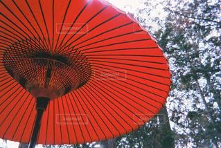 自然,空,雨,傘,屋外,ぼかし,樹木,平和,雫,フィルム,梅雨,天気,ゆっくり,フィルムカメラ,雨の日,日中,おしゃれ,君を見ている