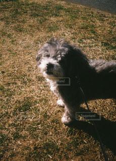 草に覆われた野原の上に立っている犬の写真・画像素材[2220640]