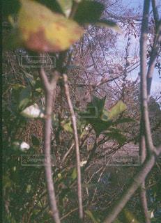 綺麗,平和,フィルム,お散歩,フィルムカメラ,フィルム写真,おしゃれ,フィルムフォト
