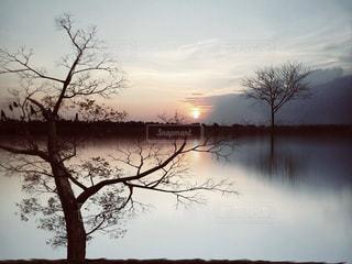 水の体の前に木の写真・画像素材[957690]