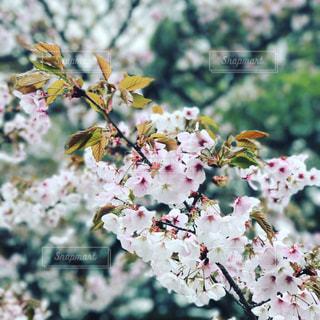 春の写真・画像素材[422753]