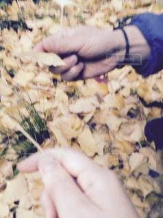 秋の写真・画像素材[2023378]