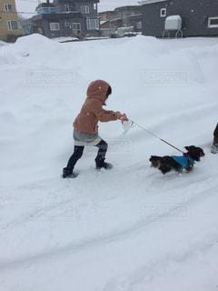 犬,冬,散歩,女の子,いぬ,お正月,初詣,ミニチュアダックス,雪道,実家,わんちゃん,お出かけ,イヌ,ワンチャン