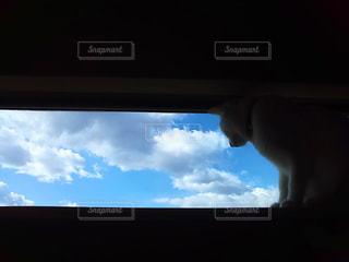 猫の写真・画像素材[1981993]