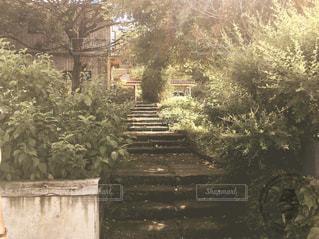 ある日の午後の写真・画像素材[1994052]