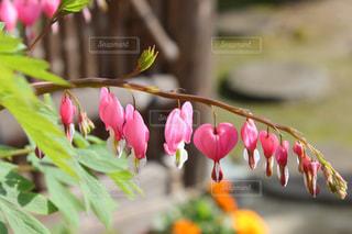 植物にピンクの花の写真・画像素材[1936977]