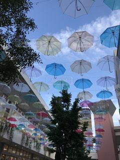傘,屋外,散歩,鮮やか,樹木