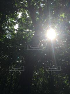 自然,空,森林,太陽,日光,光,樹木