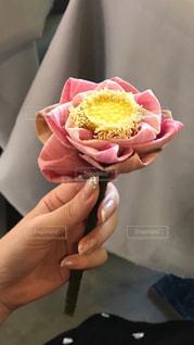 花の写真・画像素材[1909561]