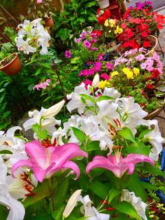 「庭の花たち」の写真・画像素材[2363939]