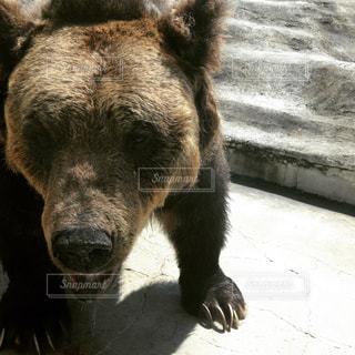 動物,屋外,黒,茶色,北海道,旅行,立つ,動物園,ベージュ,熊,ミルクティー,休暇,クマ,フォトジェニック,こげ茶,ミルクティー色