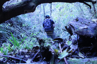 森の中の人々のグループの写真・画像素材[2218659]