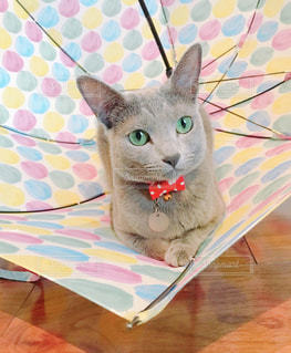 猫の写真・画像素材[2248256]