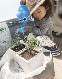 水,水滴,女の子,トマト,ミニトマト,水玉,2歳,ジョウロ,ベランダ菜園,苗,水やり,お世話係,植替え