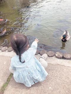公園,後ろ姿,子供,女の子,人物,背中,人,後姿,鴨,2歳,カモ,餌やり,鯉