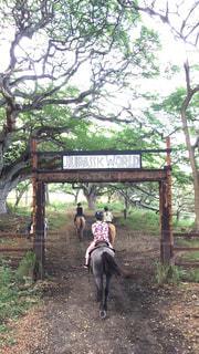 自然,アウトドア,動物,屋外,人,旅行,馬,ハワイ,乗馬,ジュラシックワールド,後ろ姿フォト