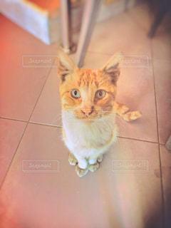 猫,モロッコ,ミルクティー色