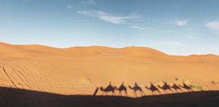 ラクダの写真・画像素材[1993768]