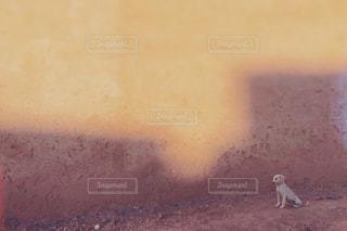 子犬,モロッコ,カスバ,ミルクティー色