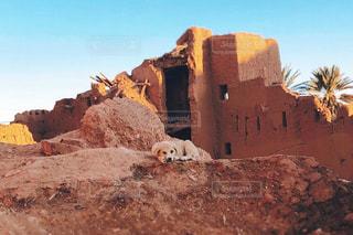 犬,モロッコ,カスバ,ミルクティー色