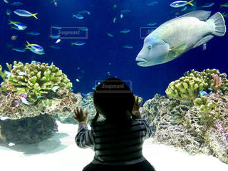 魚,青,後ろ姿,水族館,子供,水槽