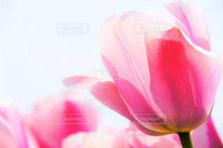 flowersの写真・画像素材[1973353]