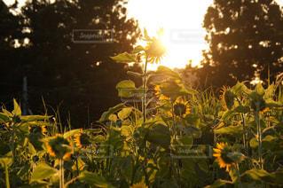 空,花,太陽,光,草木
