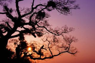 自然,風景,空,屋外,太陽,綺麗,夕暮れ,紫,影,シルエット,光,樹木,草木