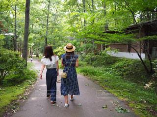女性,風景,木,屋外,太陽,森,緑,晴れ,散歩,林,観光,森林浴