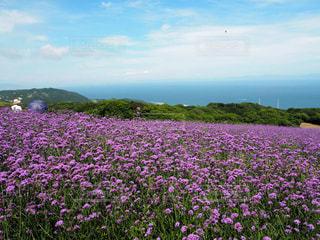 お花畑の写真・画像素材[2004593]