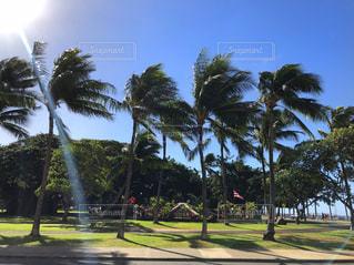 ハワイのヤシの木と空の写真・画像素材[2011198]