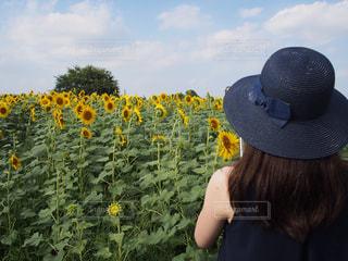 自然,風景,花,夏,屋外,ひまわり,雲,後ろ姿,帽子,女の子,向日葵,背中,麦わら帽子,可愛い,夏休み,畑,長い髪