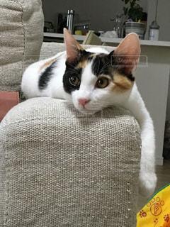 ソファーに横たわっている猫の写真・画像素材[2096988]