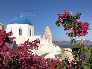 青い屋根とピンクの花の写真・画像素材[4458905]